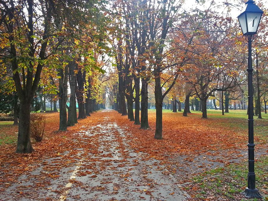 Lišće  Foto: Jasminka Vidaković  Ključne riječi: jesen park lisce