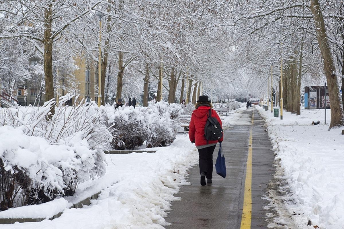 Sjenjak pod snijegom..  Foto: Tomislav Vukić  Ključne riječi: sjenjak snijeg veljaca 2015