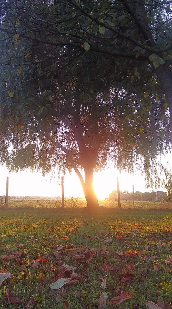 Suton  Foto: Ivana Ivić  Ključne riječi: suton sunce livada