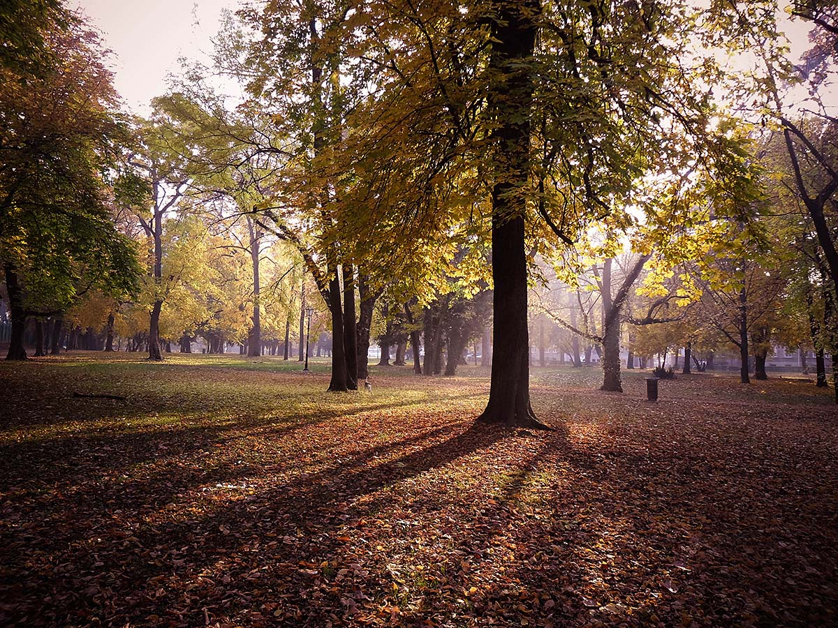 Jesen  Foto: Arthur Blurowsky  Ključne riječi: jesen park boje lisce sunce