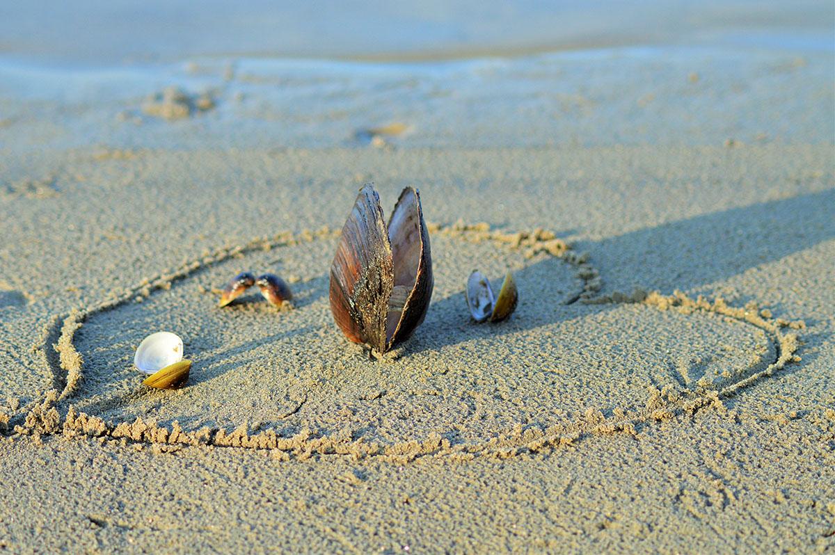 Riječne školjke  Foto: Tomislav Avramek  Ključne riječi: rijecne skoljke drava