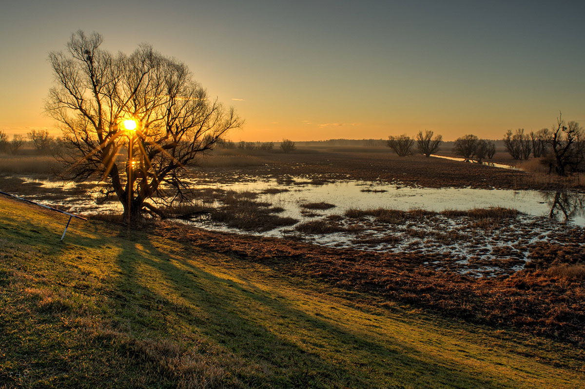 Jutro u Kopačkom Ritu  Foto: Vedran Ristić  Ključne riječi: jutro kopacki rit izlazak sunca sunce hdr